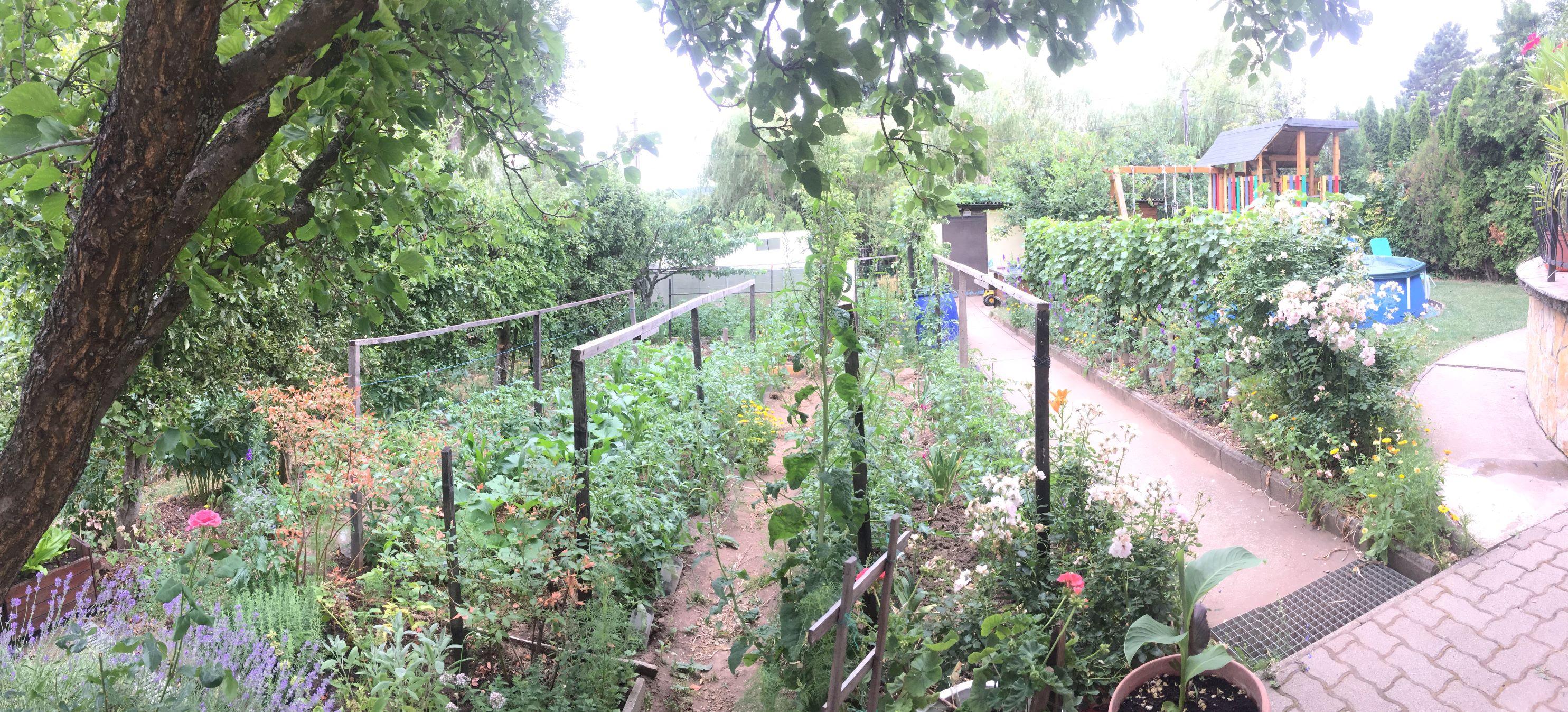 Bedő Antalné kertje